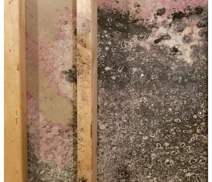 Mold growth on wallboard