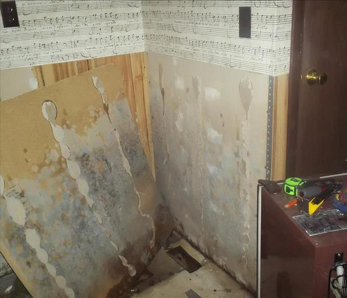 Mold Remediation Mold - Don't let it grow!